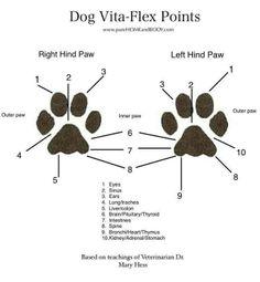 www.thekarmadayspa.com #Reflexology #dogs