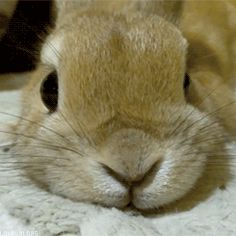Leur petit nez ronflant totalement envoûtant