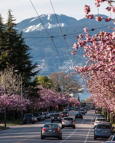 Smells like Spring Vancouver in full blossom mode. Looking down Dunbar Street past W. 16th Avenue to English Bay West Vancouver and snow up on Cypress Bowl The wires you see above the street are for our electric trolleybuses that draw power from these overhead wires. Captured yestereve in Vancouver British Columbia Canada April 7 2016 Vancouver Bc Canada, Vancouver City, Vancouver British Columbia, Vancouver Island, West Coast Canada, Vancouver Photography, City Wallpaper, April 7, Most Beautiful Cities