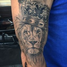 likes the humbleness of the lion