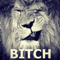 cute lion pulling a funny face black and white nature animal safari jungle photography Animals And Pets, Funny Animals, Cute Animals, Awkward Animals, Wild Animals, Beautiful Cats, Animals Beautiful, Gato Grande, Tier Fotos