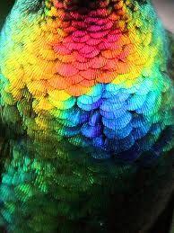 tropical birds - Google Search