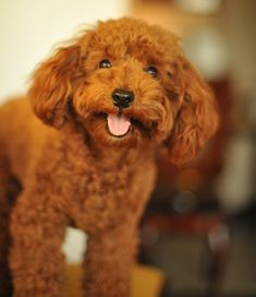 The Dog Breeds Bible is here to give you information such as behavior, looks…