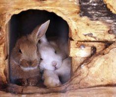 happy bunnies x