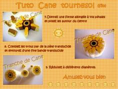 Cane Sunflower - Slice Cane