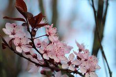 #blossom #flowers #beautiful #spring