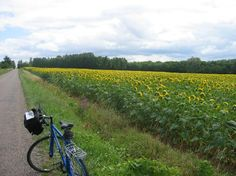 Cycling near Chorey Les Beaune Burgundy - best way to see the wineries