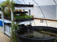 UHATOLL Video Learning | Online aquaculture courses.  Aquaculture can be scaled from a Condo lanai to major farm production.