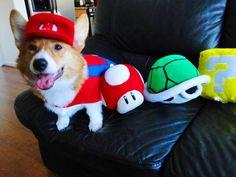 45 LOL Animal Pictures  mario dog :)