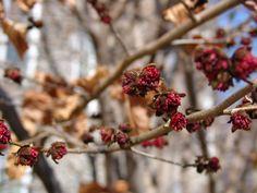 30 Best Tree Seeds Images Tree Seeds Fruit Garden Seeds