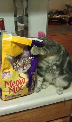 """LOL ~ as the bag say's """"NEW LOOK"""" Crazy Cat Lady, Crazy Cats, I Love Cats, Cute Cats, Silly Cats, Stupid Cat, Funny Cat Pictures, Funny Photos, Animal Pictures"""