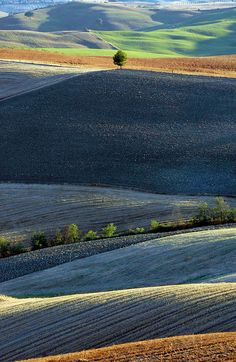 Tuscan Tree Photograph - Tuscan Tree fineartamerica - by Michael Biggs Val D'orcia Tuscany