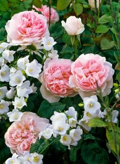 Spring Rose Care - The Easy Way | Read more:  http://whatwomenloves.blogspot.com/2015/05/spring-rose-care-easy-way.html