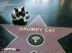 Grumpy Cat gets a star on the Walk of Fame!