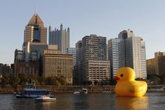 The event marks the North American debut of Hofman's Rubber Duck Project, which has taken place in other cities in Asia, Europe, Australia and South America.