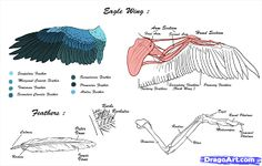 sewing crafts for christmas / sewing crafts ` sewing crafts for beginners ` sewing crafts to sell ` sewing crafts for kids ` sewing crafts ideas ` sewing crafts for the home ` sewing crafts patterns ` sewing crafts for christmas Wing Anatomy, Anatomy Study, Eagle Drawing, Wings Drawing, Owl Wings, Eagle Wings, Girl Scout Activities, Sketches Tutorial, Costumes