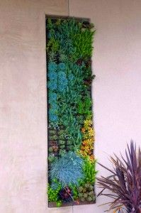 Mini Vertical Garden Design - Make one for the kitchen