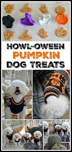 Howl-oween Pumpkin Dog Treats | homeiswheretheboatis.net #recipe #BichonFrise #Maltipoo #dogtreats #Halloween #pumpkin