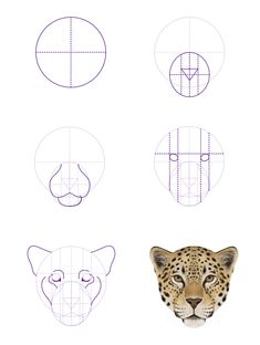 How to Draw Animals: Big Cats, Their Anatomy and Patterns – Part 2