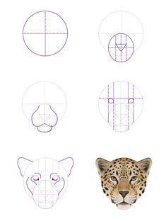 Tête de Jaguar ☺