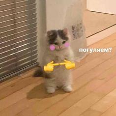 Cute Funny Animals, Funny Cute, Cute Cats, Response Memes, Cute Love Memes, Mood Pics, Cartoon Memes, Wholesome Memes, Meme Faces