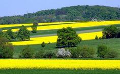 Brasilianische Farben im Saarland, Germany.