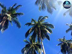 Sun rays over palm trees, mornings on Koh Samui, Thailand, www.footloos.com Samui Thailand, Koh Samui, Sun Rays, Mornings, Palm Trees, Plants, Palm Plants, Acre, Plant