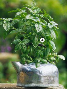 Tea Kettle Herb Garden