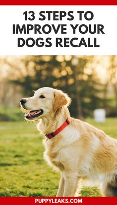 How to teach your dog to come when called. 13 steps to improve your dogs recall.