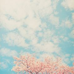 the cherry tree and the clouds in the sky