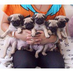 cuteness overdose!