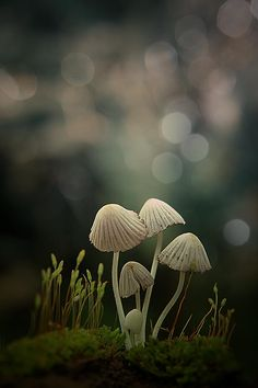 little family by budi 'ccline' - Photo 99617667 / 500px