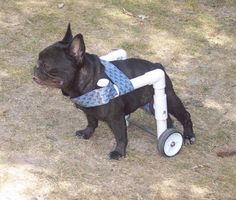 diy dog wheelchair - Google Search