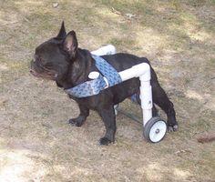 diy dog wheelchair - Google Search