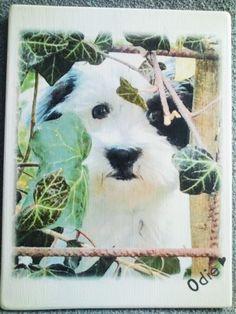 Decobordje Odie afbeelding met naam erop geschilderd | Karin's Deco Atelier