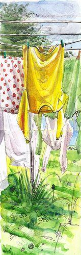 yellow jersey in a London garden
