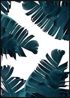 Teal Banana Leaves Tropical Posters, Banana Leaves, Plant Leaves, Teal, Plants, Plant, Planets, Turquoise