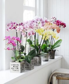 Blumen Orchid care tips and interesting information about the exotic beauties of colorful flowers ar Easy Plants To Grow, Growing Plants Indoors, Orchids Garden, Orchid Plants, Moth Orchid, Roses Garden, Orchid Flowers, Fruit Garden, Colorful Flowers