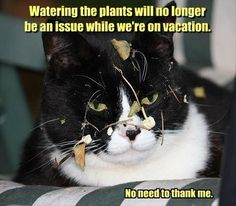Watering the plants will not be an issue when we're on vacation.  No need to thank me.