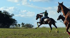 Gathering with all the top Polocrosse players at Antelope Park. Zimbabwe, Wander, Horses, Explore, Park, Places, Top, Animals, Animales