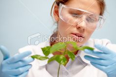 Agronomist with plant Royalty Free Stock Photo