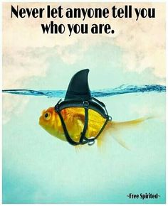 Never let anyoe tell you who you are! Dream big and enjoy your Fin Fun shark fins!