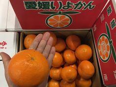 青果物の流通  ソーシャルメディアアグリ「地場活性化」のために: がんばれ!受験生⑤