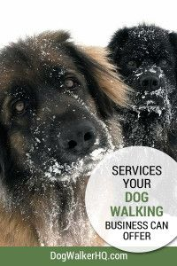 What Services can you offer in your Dog Walking Business?
