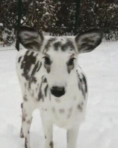 Cute Wild Animals, Rare Animals, Cute Little Animals, Cute Funny Animals, Animals Beautiful, Animals And Pets, Cute Dogs, Cute Animal Videos, Cute Animal Pictures