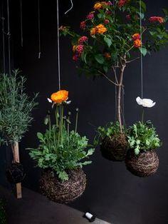 stringplants.com   Aprenda como fazer seu jardim suspenso!