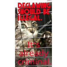 Declaw should be illegal
