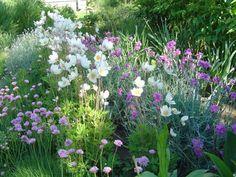 Szellőrózsa - kiskertem.lapunk.hu Plants, Color Combinations, Gardens, Plant, Planets