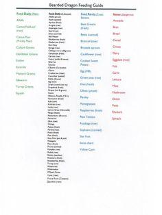 Bearded Dragon Food Chart <b>bearded dragon food chart</b> - reptile forums Bearded Dragon Feeding, Bearded Dragon Food List, Bearded Dragon Funny, Bearded Dragon Habitat, Bearded Dragon Cage, Bearded Dragon Terrarium, Fancy Bearded Dragon, Bearded Dragon Vivarium, Bearded Dragon Enclosure