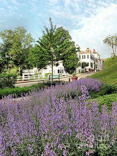 Catmint Garden - Plymouth, MA - Janice Drew